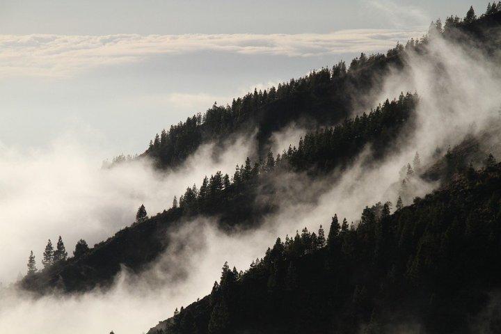 fog-1220491_960_720